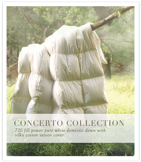 Concerto Collection